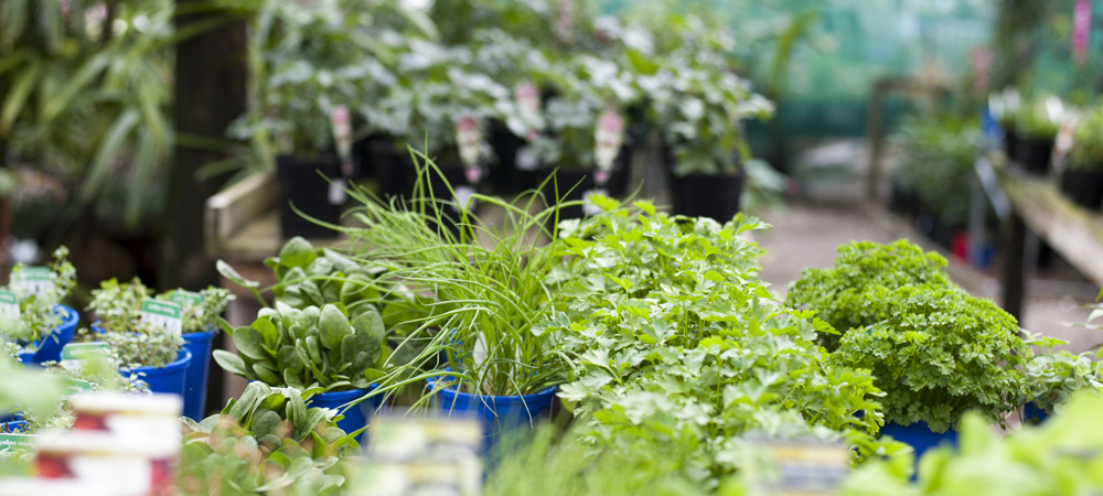 seedlings_and_herbs